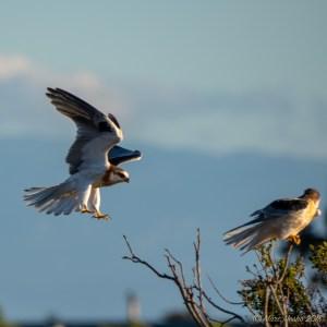 birds - PA040282.jpg