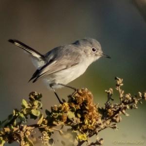 birds - PA230741.jpg