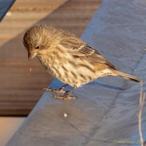 birds - PA280497.jpg
