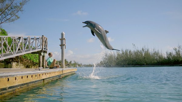 Dolphin Kick Movie Picture