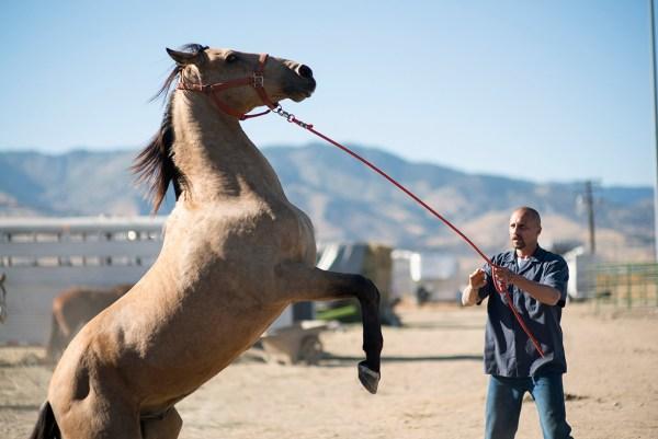 Matthias Schoenaerts - The Mustang Movie