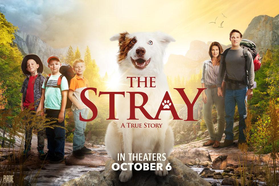 movie the stray