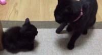 この猫の戦闘力にみんなノックアウトと話題に