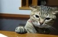 我慢しているネコが可愛いと話題