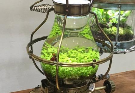 京都府立植物園の水草展のランプ型水槽がおしゃれだと話題に