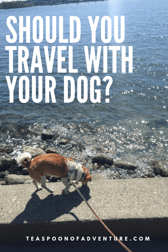 Should you travel with a dog? Check out these pros and cons before you start travelling with your dog! #travel #traveltips #dogtravel #dogtraveltips
