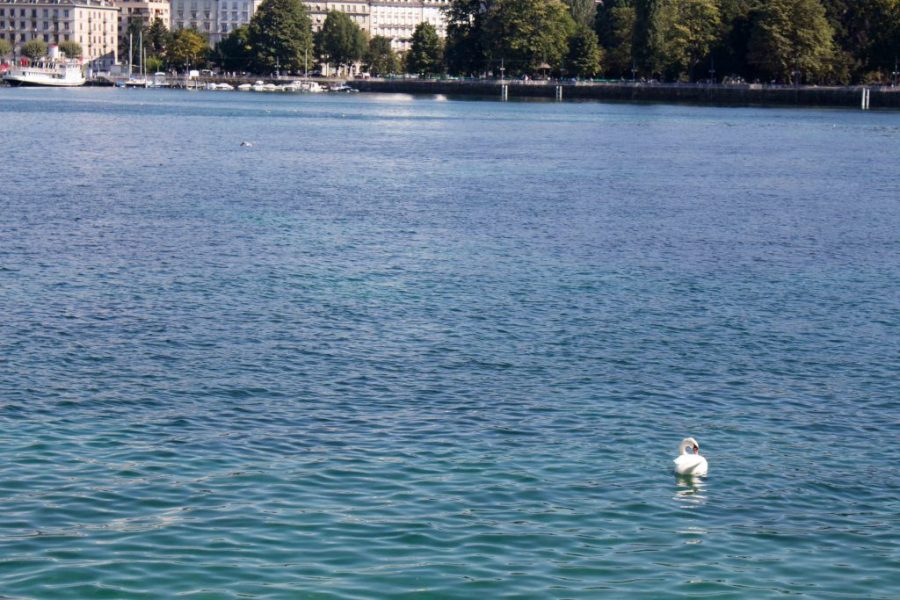 Geneva is a fantastic city. Here's a few things you can't miss in Switzerland!   Teaspoon of Nose