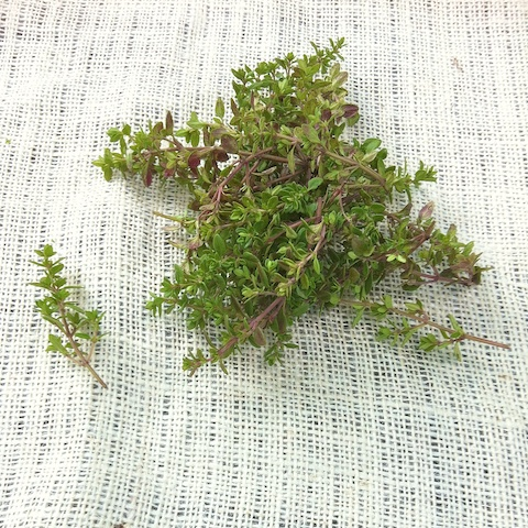 Lemon thyme for Roasted Tomato Crostata