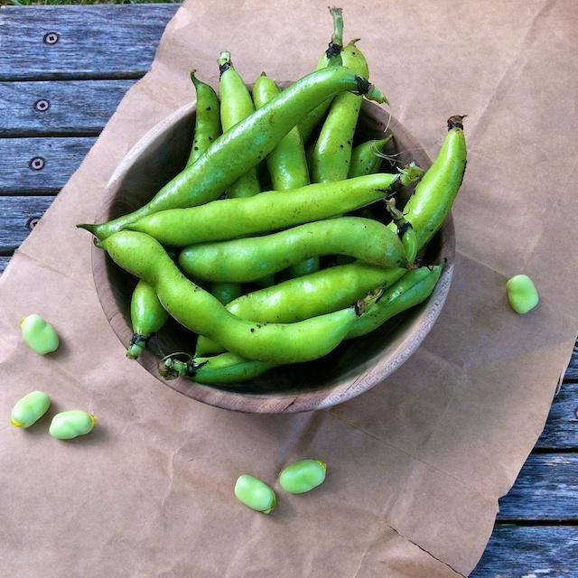 How to Cook Fava Beans | Teaspoonofspice.com