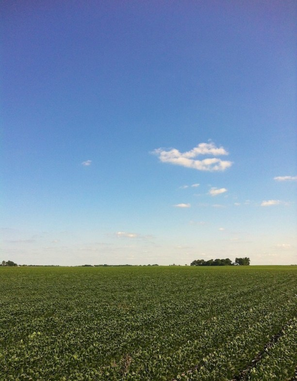 Iowa Soy Field | Teaspoonofspice.com