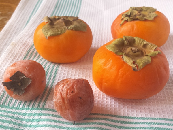 #HealthyKitchenHacks: How to use persimmons How to find wild persimmons | @tspcurry