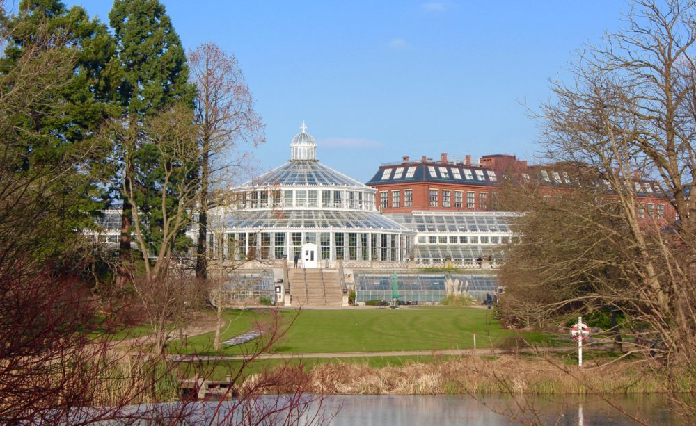 botanisk have, palmehuset, palmehuset i botanisk have,