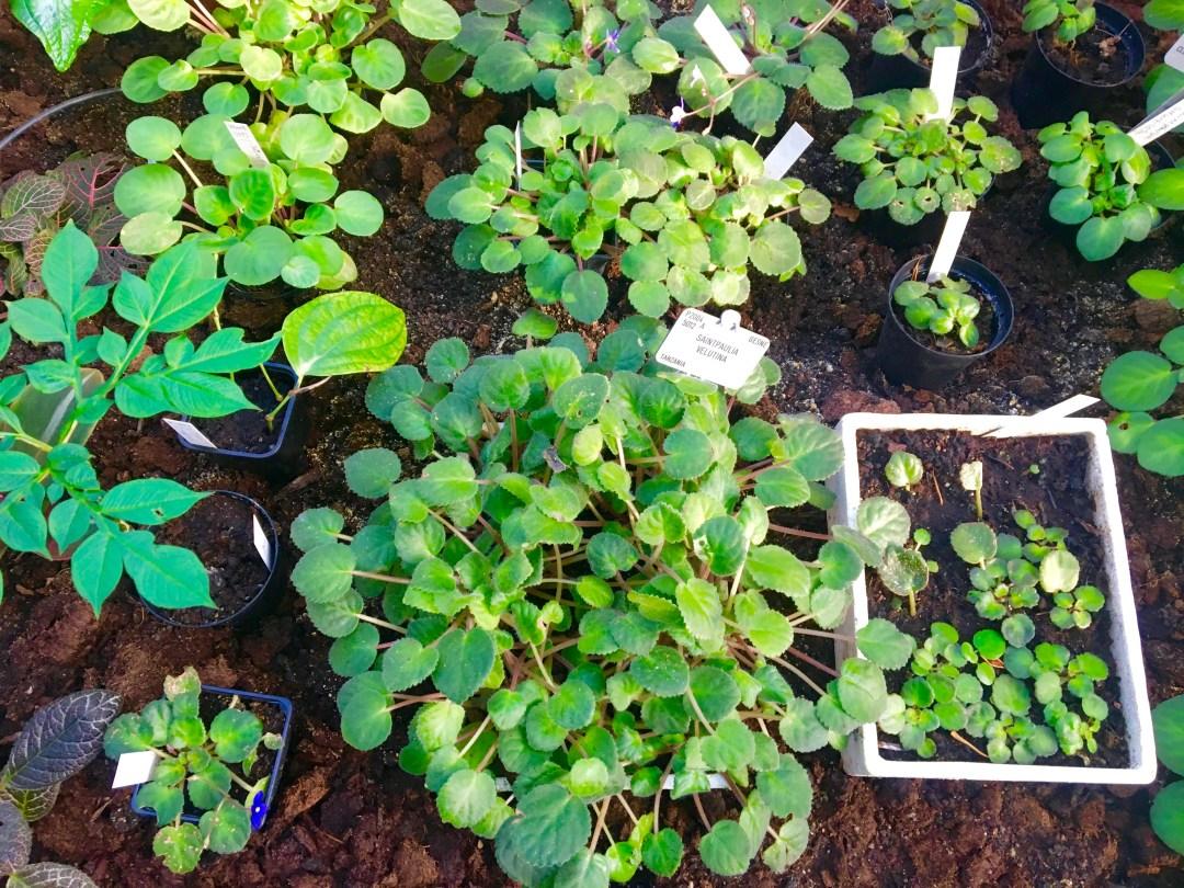 botanisk have, planter i københavn, palmehuset,