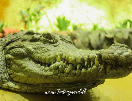 gdansk zoo, zooligsk have i Gdans, polen zoologisk have, seværdighederi Gdansk, gdansk seværdigheder, Gdansk guide, guide til Gdansk, krokodille, zooligiske haver i udlandet, zoologiske haver i polen