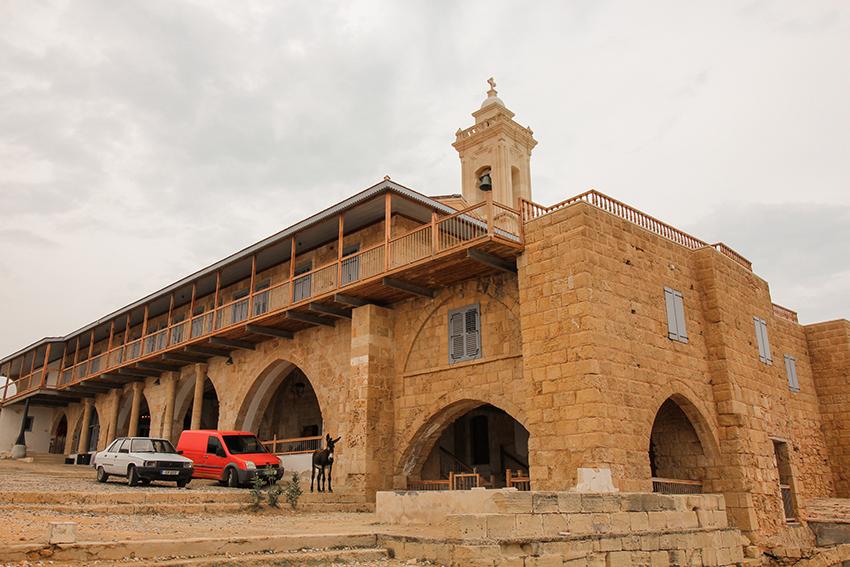 vilde æsler, karpas, Apostolos Andreas Monastery, nordcypern spids, sidsten af nordcypern, æsler på cypern, seværdigheder på nordcypern
