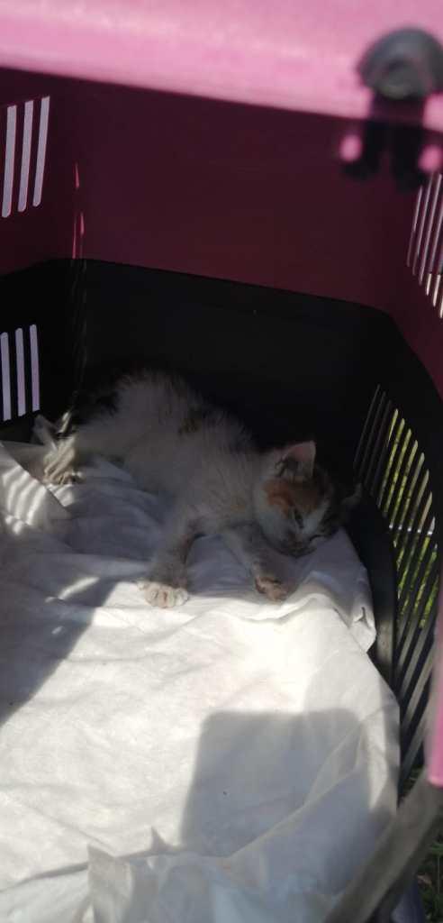 kattekilling i skakt, katte i Alanya, Alanya kattekilling, Alanyas brændvæsen,
