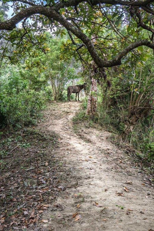 CENIT Arte Natura - Donkey