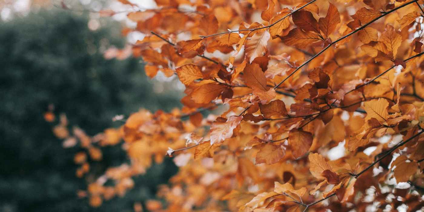 shallow focus photography brown leaf tree