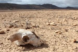 Mass species extinction