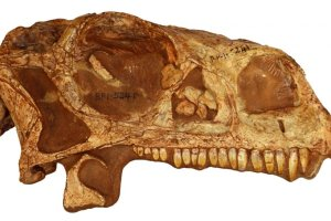 Print a 200-million-years-old 3D dinosaur at your home