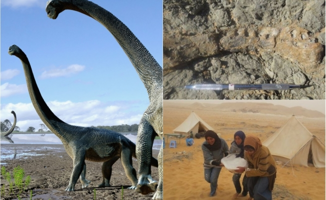 Fossil reveals secrets of African dinosaurs