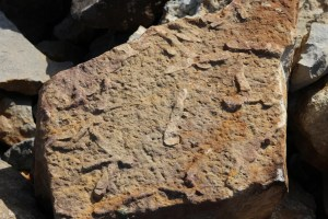 NASA disapproves existence of trace fossils on Mars; says there are still no signs of life
