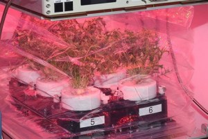 Tupperware is helping NASA to grow fresh foods out in space