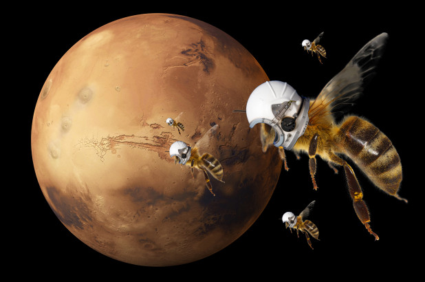 Soon, a swarm of robotic bees will investigate the Martian atmosphere