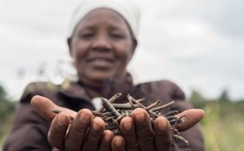 Kenya's Pula raises $6 Million Series A to provide Insurance to Small Farmers