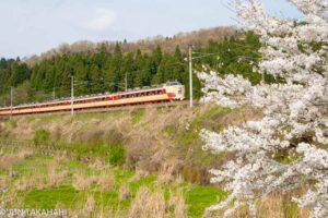 春の北陸本線 桜と485系雷鳥