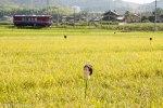 鉄道写真 美しい風景が広がる長良川鉄道