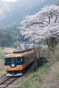 大井川鐵道と桜