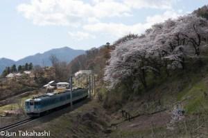 桜の姨捨を走る115系