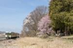 小海線沿線の桜はいつ咲くのか?