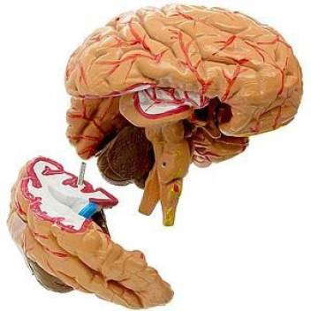 Rechargeable Soft Brain