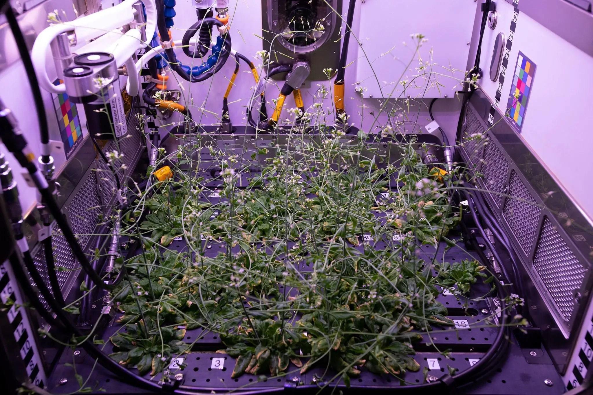 Advanced Plant Habitat PH-04