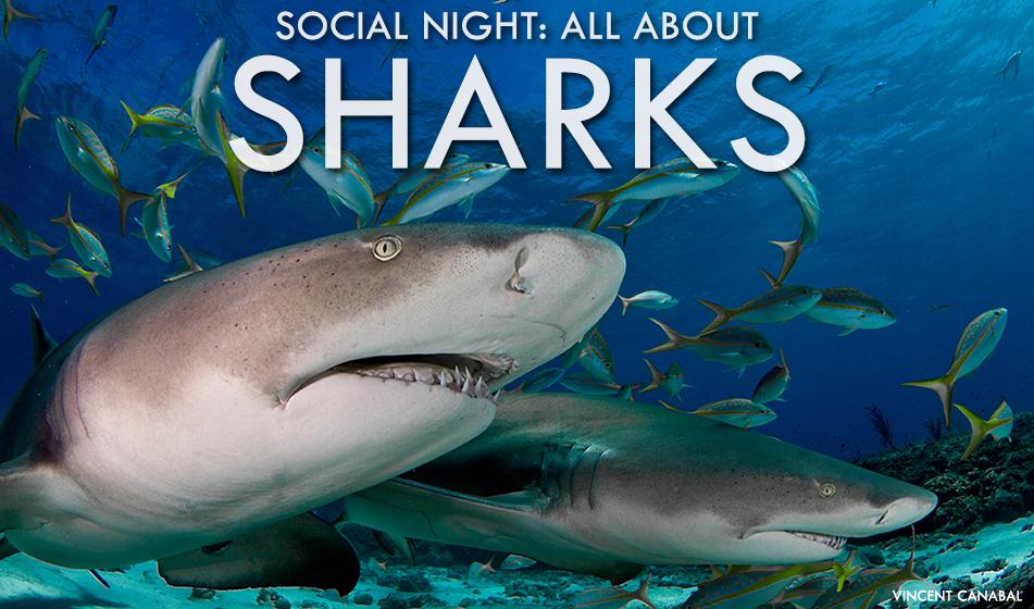 FEB 15: SOCIAL NIGHT – SHARKS