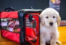 PREP Pet Rescue Evac Pack A pet smoke proof carrier crop