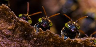 Pests in your business ants looking