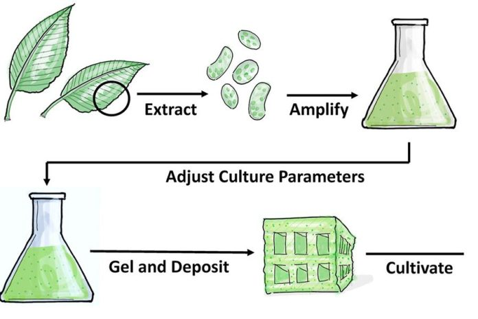 MIT-Cultured-Plants