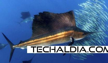 android nexus sailfish techaldia.com