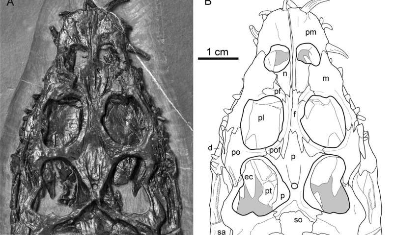 Ancient marine predator had a built-in float