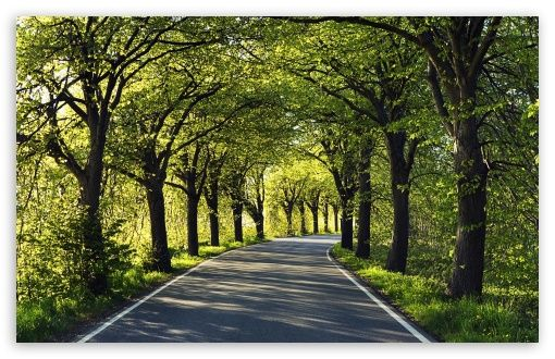 road_among_trees-t2