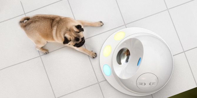 gadgets to make your pet smarter