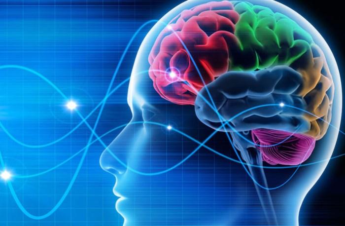El Internet está cambiando la estructura y capacidad de nuestro cerebro