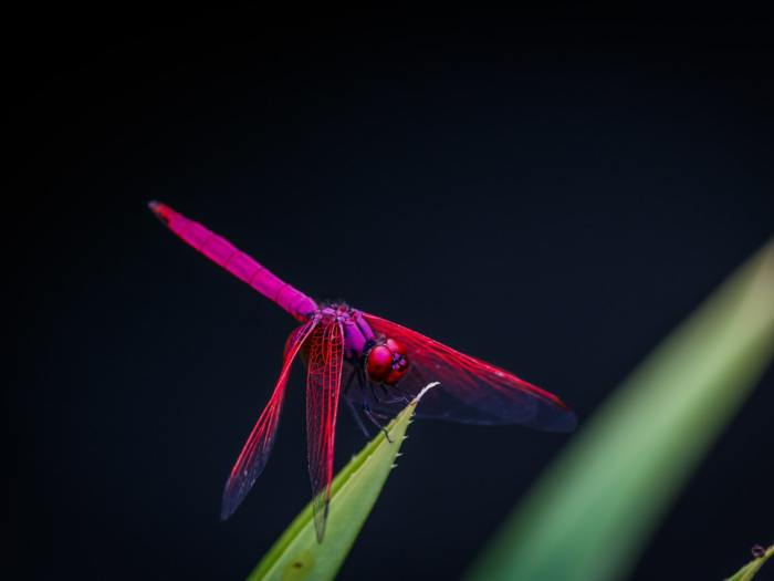 Project Dragonfly by Google