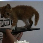 Το Sony Togari ή XPERIA ZU Διαρρέει Σε Φωτογραφία Με Ένα Γατάκι