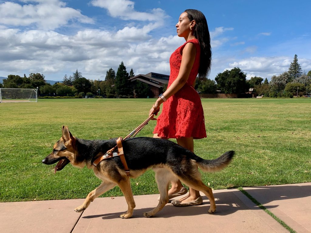 Haben Girma walks with with Mylo, her seeing guide dog near a park with freshly cut, green grass and trees in the background.