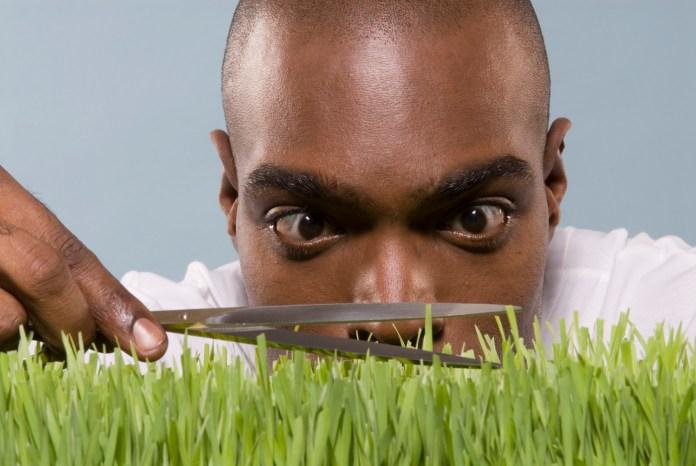 Man cutting wheatgrass with scissors, close-up