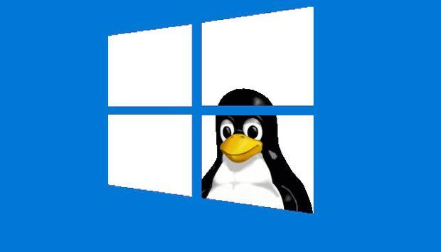 tux through window 620x354 1